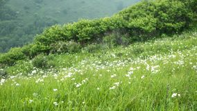 China Hebei Heilongshan Meadow footing Landscape Stock Image