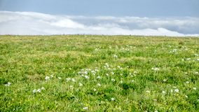China Hebei Heilongshan Meadow footing Landscape Stock Images