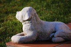 China-Hund, der die Sonne gegenüberstellt Lizenzfreie Stockbilder