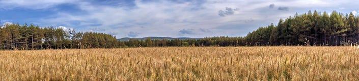 China Inner Mongolia Oroqen flag wheat field Stock Image