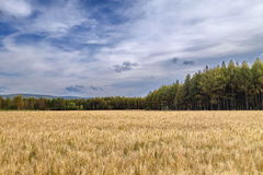 China Inner Mongolia Oroqen flag wheat field Royalty Free Stock Image