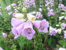 China Jinzhou International Horticultural Exposition-flower Stock Image