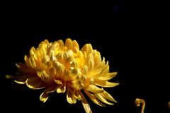 China Kunming Grand View Park Chrysanthemum Exhibition stock photography