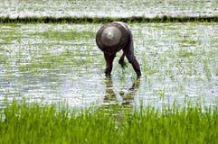 China - Landwirt auf dem Reisgebiet Stockfotografie