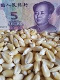 China, maize producing country, dry corn grains and chinese banknote of five yuan. Yellow edible seed, agriculture and harvest, world cereal production stock image
