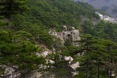 China Mount Huangshan with green trees and beautiful rocks Royalty Free Stock Image