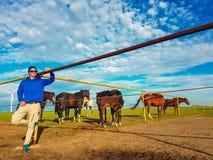 China - muchacho de la vaca en Inner Mongolia fotos de archivo