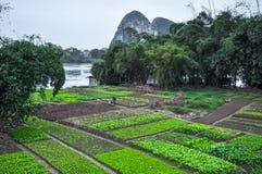 China Mujer que trabaja en el jardín en la orilla del río imagenes de archivo