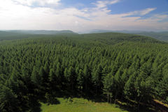 Free China Pine Forest Bird View, Bashang, China Royalty Free Stock Photography - 17828627
