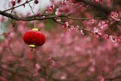 China Plum Blossom Festival Lantern Royalty Free Stock Images