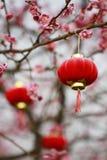 China Plum Blossom Festival Lantern Royalty Free Stock Photo