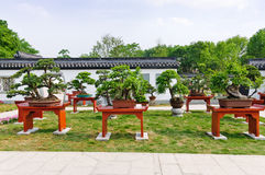 China potted  in the park Royalty Free Stock Images