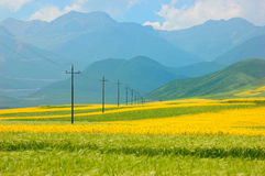 China Qinghai Flower and Field Landscape Stock Image