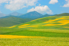China Qinghai Flower and Field Landscape Royalty Free Stock Photo