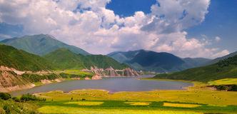 China Qinghai Flower and Field Landscape Stock Images