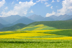 China Qinghai Flower Landscape Stock Images