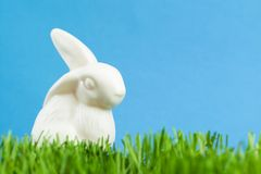China rabbit is in the green grass Royalty Free Stock Photography