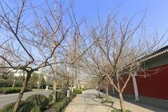 China-redwall im Winter, luftgetrockneter Ziegelstein rgb Lizenzfreie Stockbilder