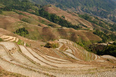 China - rice terraces Royalty Free Stock Photos