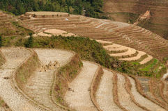 China - rice terraces Stock Photography