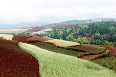 China rural landscape Stock Image