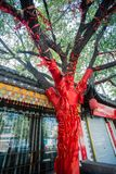 China`s blessing tree. China blessing trees a lot of red cloth Royalty Free Stock Photo
