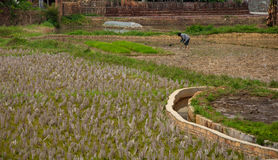 China's countryside. One farmer in the fields Stock Photo
