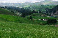 China's rural scenery. Cornfield hamlet Royalty Free Stock Photo