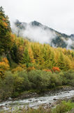 China Sichuan autumn scenery of Heishui Stock Photography