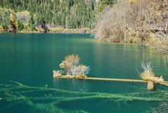 China Sichuan Jiuzhaigou scenery Royalty Free Stock Photography