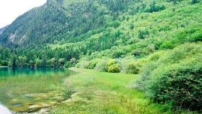 China sicuan del ¼ del ï del parque nacional de Jiuzhaigou Fotografía de archivo