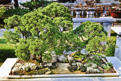 China Suzhou Bonsai Green Tree Stock Photos