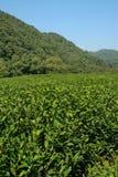 China Tea Royalty Free Stock Photography