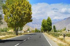 Autumn Aspens and Highway. China Tibet a road autumn scenery in October royalty free stock image
