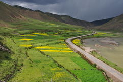 China Tibet Zuogong rape flowers Royalty Free Stock Images