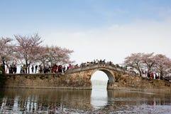 China Wuxi Shantou Cherry Blossom Festival fotos de stock