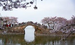 China Wuxi Shantou Cherry Blossom Festival imagens de stock