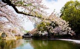 China Wuxi Shantou Cherry Blossom Festival foto de stock royalty free