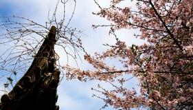 China Wuxi Shantou Cherry Blossom Festival fotografia de stock