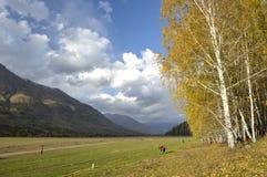 China/Xinjiang: birchwoods y prado en hemu Imagenes de archivo