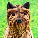 China yorkshire terrier Stock Image