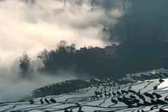 China Yuanyang mehr durch Baumlandschaft Lizenzfreies Stockbild