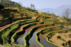 China Yunnan Hani Terrace View Stock Image