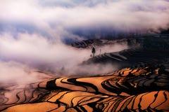 China Yunnan Yuanyangtitian mehr durch Baumlandschaft Lizenzfreies Stockfoto