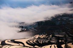 China Yunnan Yuanyangtitian mehr durch Baumlandschaft Lizenzfreie Stockbilder