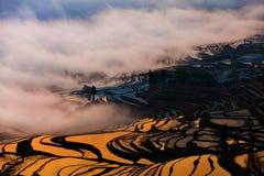China Yunnan Yuanyangtitian mehr durch Baumlandschaft Stockbilder