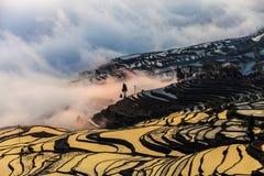 China Yunnan Yuanyangtitian mehr durch Baumlandschaft Lizenzfreies Stockbild