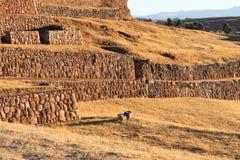 Chinchero Pérou Photos libres de droits