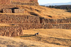 Chinchero Peru Royalty Free Stock Photos