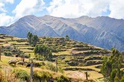 CHINCHERO PERU JUNI 3, 2013: Landskap av traditionella terrasser för ett Incalantbruk Arkivbild